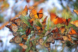 Gemini energy is like a butterfly